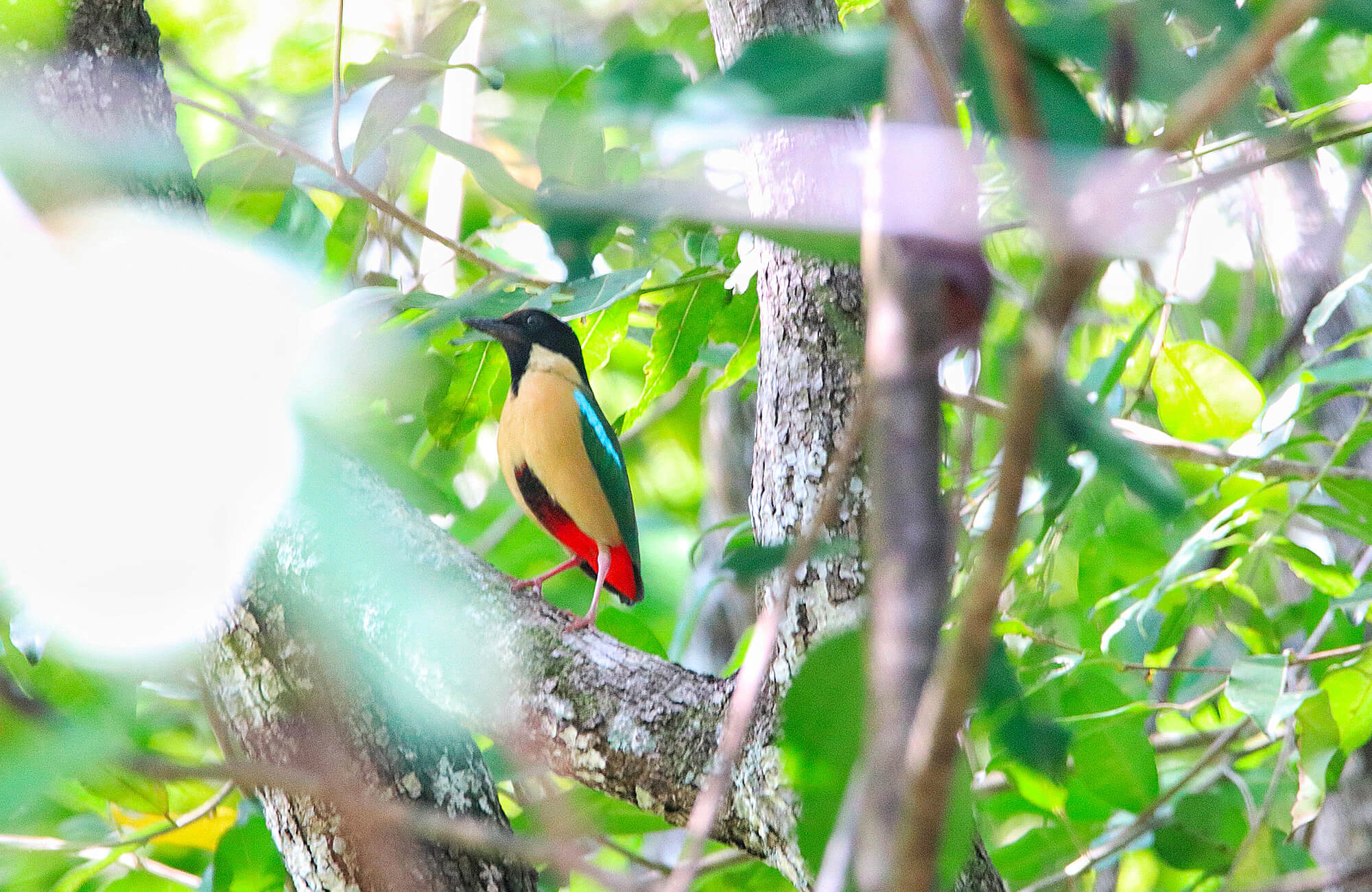 Elegant Pitta | Bali & The Lesser Sundas